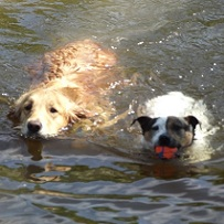 Harley and ruby enjoy a swim