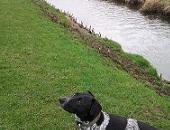 Dog Walks Chester Pub